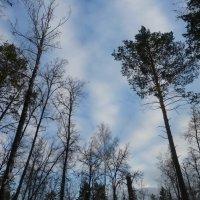 Ноябрьское небо :: Raduzka (Надежда Веркина)