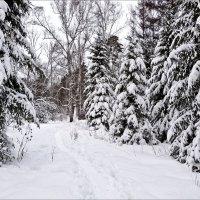 Вот и зима! :: Валентина *