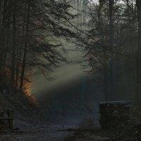 последний свет Солнца к концу дня :: Heinz Thorns