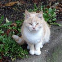 Дворовые кошки :: Маргарита Батырева