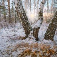 Дуновение зимы :: Ольга Соколова