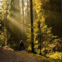 Солнечный день в лесу :: Анна Углова (Рыбакова)