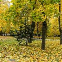 Золотая осень Смоленщины :: Милешкин Владимир Алексеевич