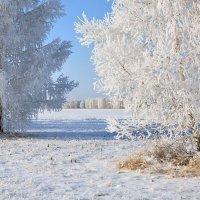 Принакрылись  снегом,  словно  серебром :: Геннадий Супрун
