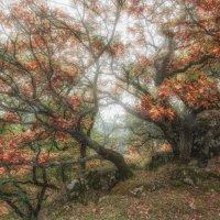 Осенний ажур... :: Александр К.