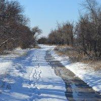 По зимним тропинкам...пройдём подруга... :: Андрей Хлопонин