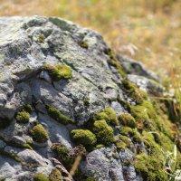 Камни и мох :: Анастасия Сивакова