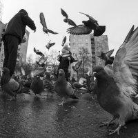 Прогулка :: Дмитрий Чернин