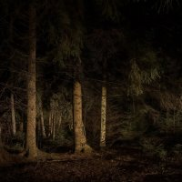По дремучему лесу ... :: Va-Dim ...