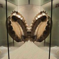 Паттерны за стеклом :: irina Schwarzer