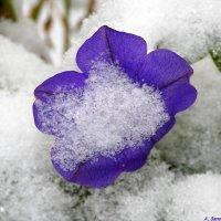 Про ушедшую красоту.. :: Андрей Заломленков