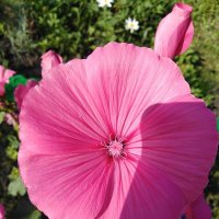 Цветок. :: Павел Н