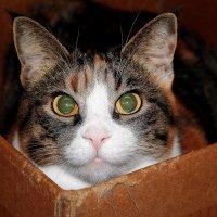 Кошки и Коты: милашка Пуся :: Елена Даньшина