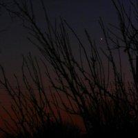 Венера в пурпурном закате :: Alisa Koteva