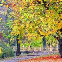 Ярко рыжими красками вспыхнула осень,отгорая под ноги ложится листва.. :: Гала