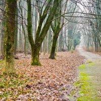 зимний лес :: юрий иванов
