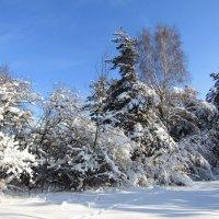 Зима в лесу :: Андрей Снегерёв