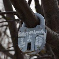 Дерево под замком ! :: Алексей