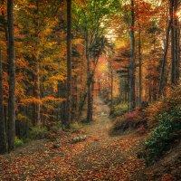 Осенний лес :: Геннадий Клевцов
