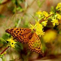 опять бабочки...10 :: Александр Прокудин
