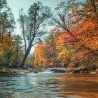 река Цица :: Геннадий Клевцов