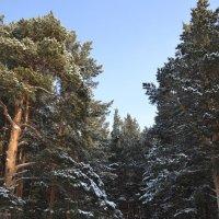Остались зимовать :: Андрей Хлопонин