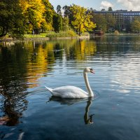 Лебедь белая плывёт :: Валерий Цингауз