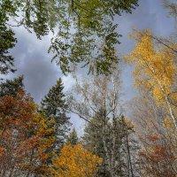 Небо октября... :: Владимир Жданов