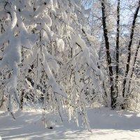 Под тяжестью снега :: Андрей Снегерёв