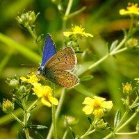 опять бабочки...15 :: Александр Прокудин