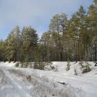 Дорога в лесу :: Anna Ivanova