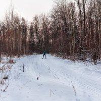 На вечерней лыжне :: Виктор Замулин