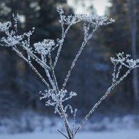 При минус двадцати градусах... :: Зинаида Каширина