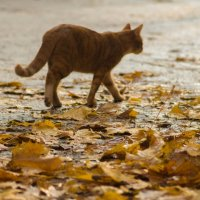 Осенний кот :: Анна Углова (Рыбакова)