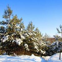 Зимушка - зима :: Андрей Снегерёв