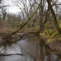 Ручей впадающий в реку раин :: АЛЕКС Alex