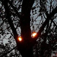 Кошмар на улице Вязов... :: ЛЮБОВЬ ВИТТ