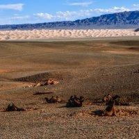 пейзаж плато пустыни Гоби :: Георгий А