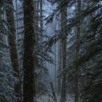 Тайга. Первый снег. :: Георгий
