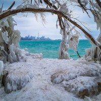 Winter in Toronto :: Andy Zav