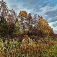 Цвет осени :: Лара Симонова