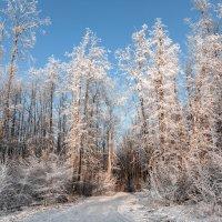 Седые наряды леса :: Виктор Замулин