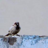 Птичка - невеличка :: Наталья (D.Nat@lia)