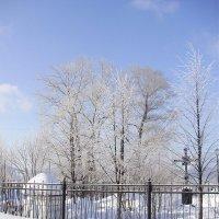 Деревья у ограды :: Иван Семин