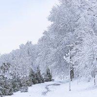 В парке зимой :: Ольга Акимова