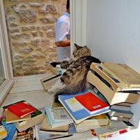 Кошка на окошке :: Владимир