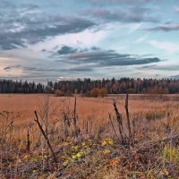 Сухие травы :: Лара Симонова