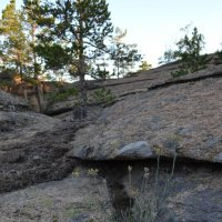 Камнеломка...Внутренний интерьер леса и гор Каркаралы. :: Андрей Хлопонин