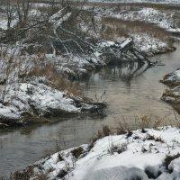 Однажды, зимнею порой, коряги шли на водопой. :: Екатерина Рябинина
