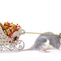 Год крысы :: Алексей Кузнецов